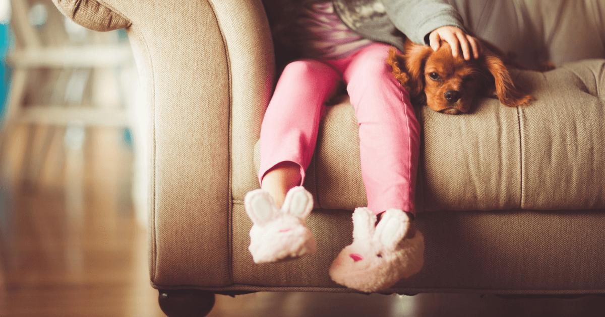 Cachorro em Apartamento com Criança